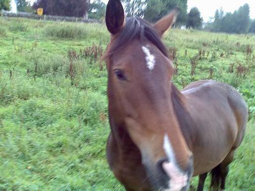 Sir Horse