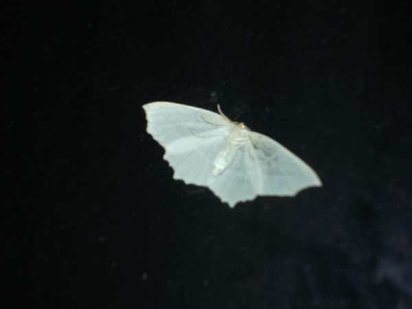 I'm mothy