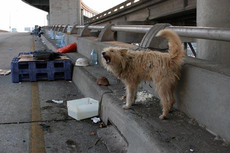 Katrina's Canine Victims 0003