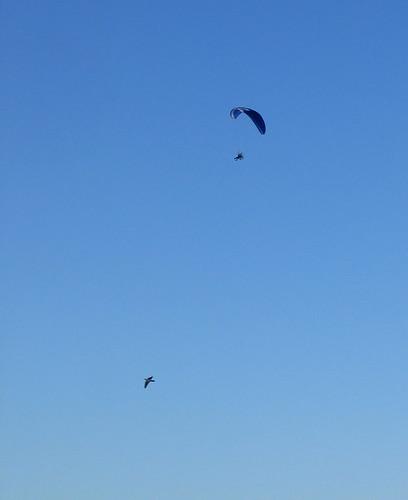 Two fliers