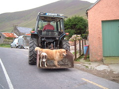 Dog Transport on the Dingle Peninsula