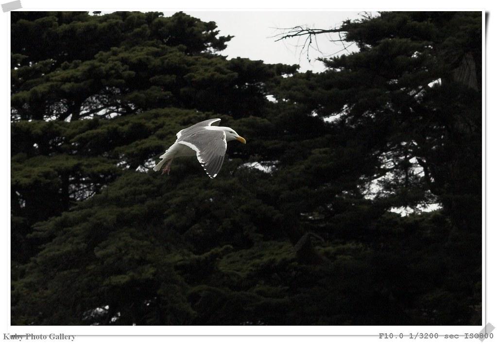 在美f金山拍的w羽