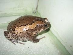 Frog Phase 9 IMG_0739