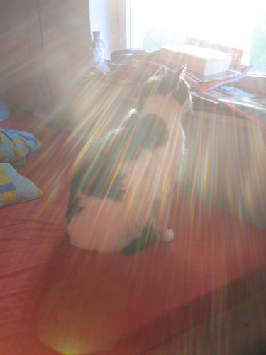 milka im morgenlicht