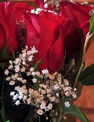 rose_092106