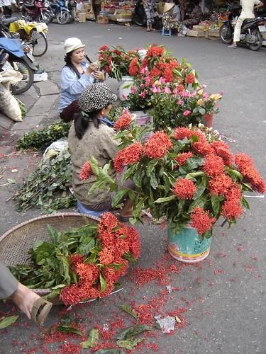 Hoa Hanoi
