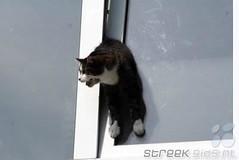 Kat vast tussen raam, gered door brandweer