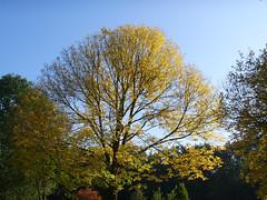 Herbstimpressionen1
