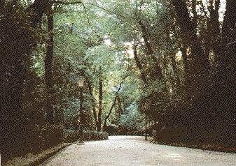 bosque_alhambra