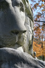 lion, a different view, too