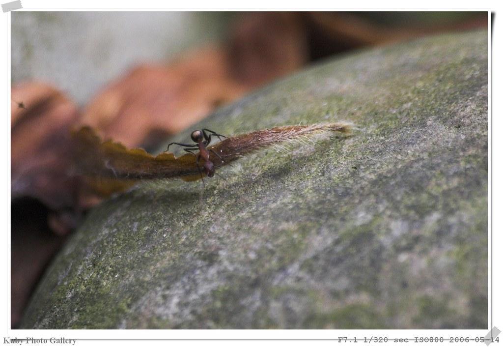 同場加映 小螞蟻一隻