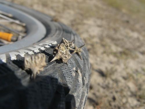 Big meaty thorns cannot hurt these tyres!/ このタイヤ、強いよ!これでもパンクなし(烏魯木斉と天池の間)