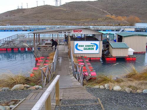 鮭魚養殖區的入口