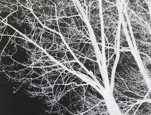 nether tree