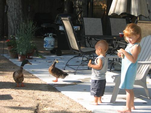 duck_feeding_1_1