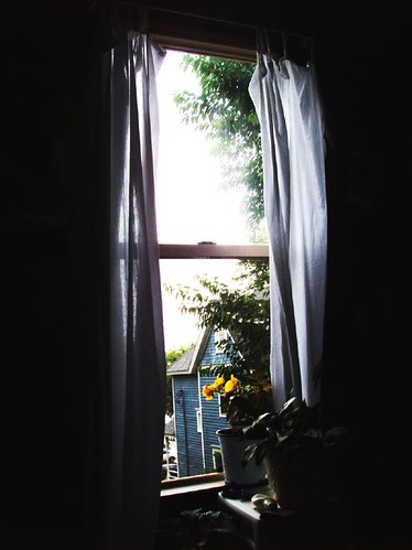 my rainy window and yellow flower