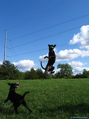 Catch!