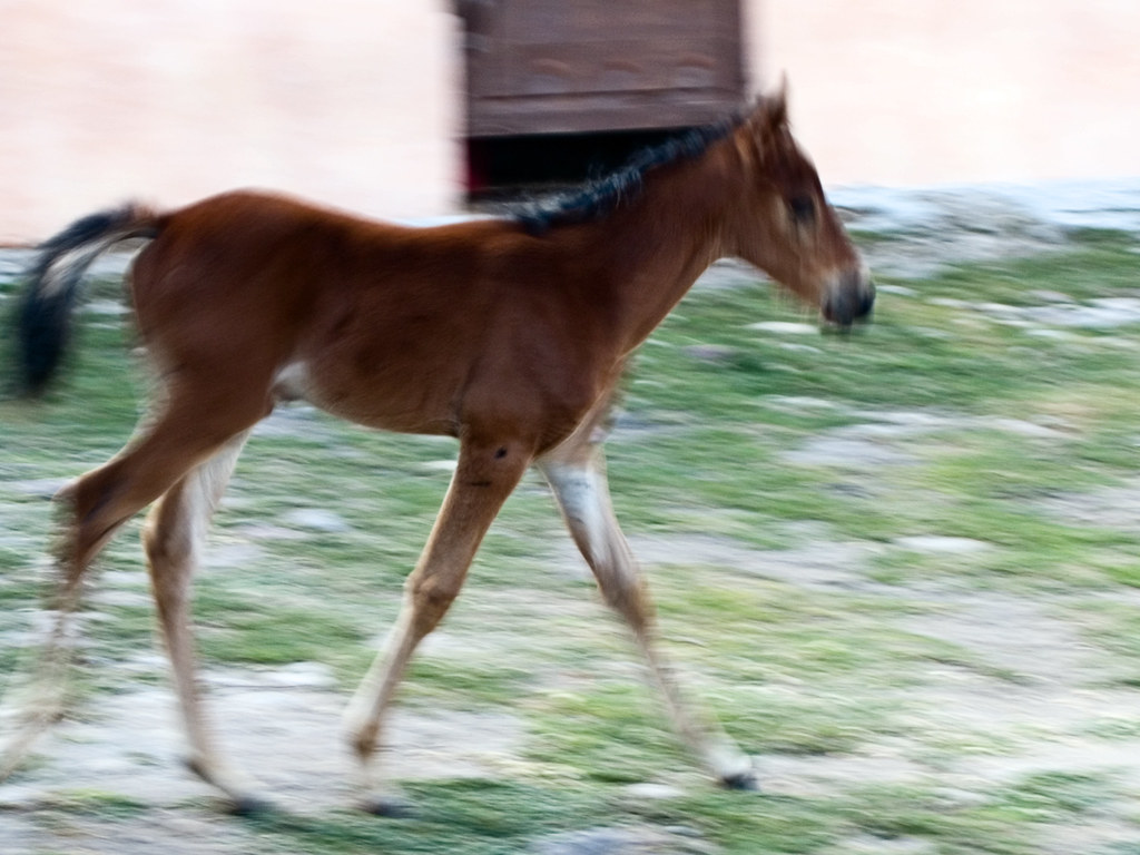 The Young Foal