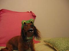 Frog Monster
