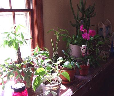 Plant_Family