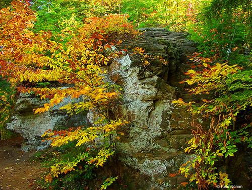 Fall at Grand Ledge