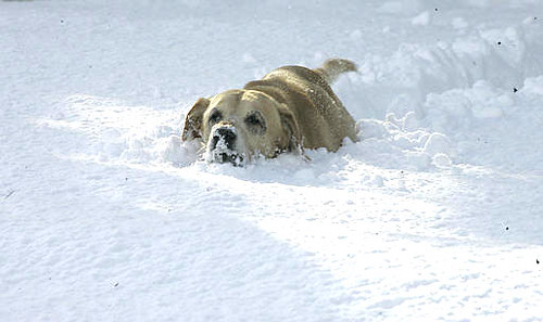 450_ap_snow5_061013