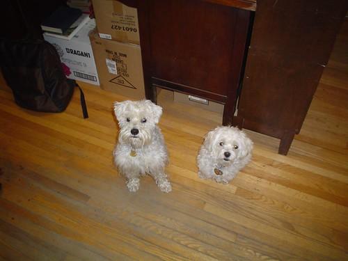Huxley & Casper