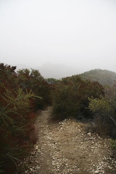 foggy_trail