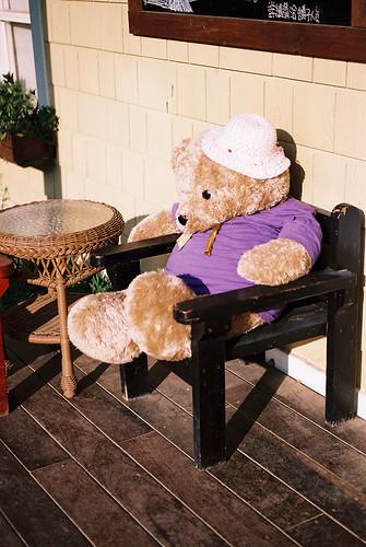 lavender_bear
