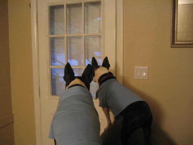 Security Terriers