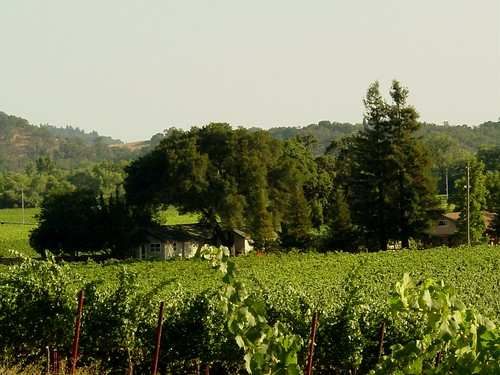 Vineyards at Stryker Vineyards