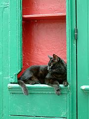 莎士比亞書店前的慵懶黑貓