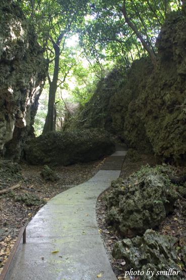 往垂榕谷的小徑