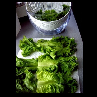 Not Mine - washing lettuce