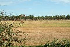 field 25.08.06