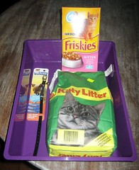 Stuff for the cat