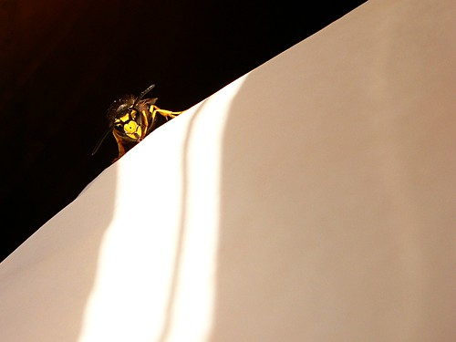 a wasp at the Burger Baron