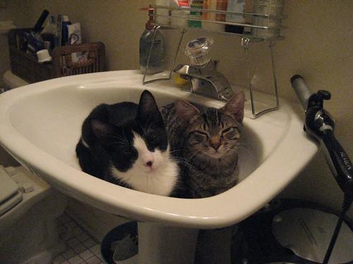 Murphy and Zordon