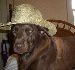 cowgirl faith