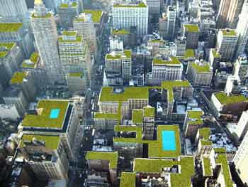 NYC Green Roofs