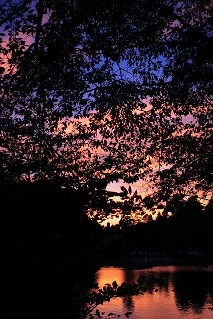 枝先の極彩色