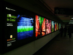 Brooklyn in Color - subway lightboxes