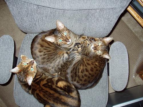3catsonchair.jpg