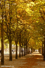 Autumm in Paris in Colour