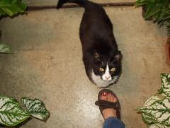 Greenjeans cat.JPG