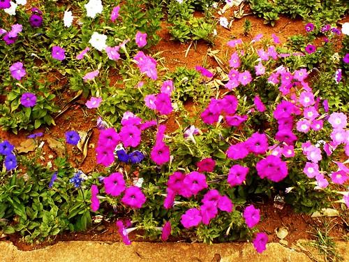 flores muitas cores