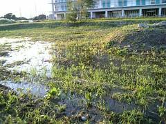 http://www.flickr.com/photos/laclef_yoshiyasu/266950201/