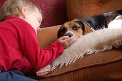 mauling the dog