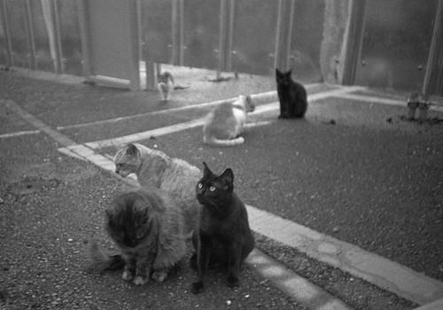 ピンボケ猫達
