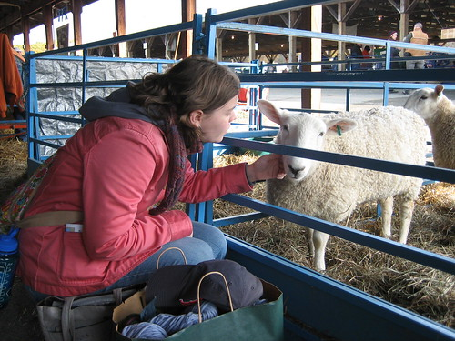 bonding with photogenic sheep